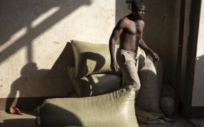 """Un fotosafari tra i """"cacciatori"""" di caffè in Uganda"""