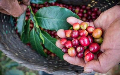 Caffè Fairtrade: cos'è, quanto vale, chi lo produce e chi lo consuma