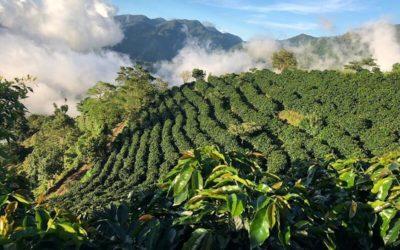 Acra rende la filiera del caffè in Honduras più sicura